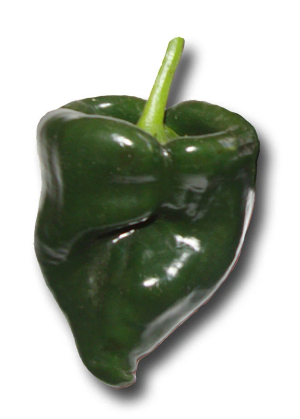 Poblano Pepper (perfect for an Aleppo Pepper Substitute)