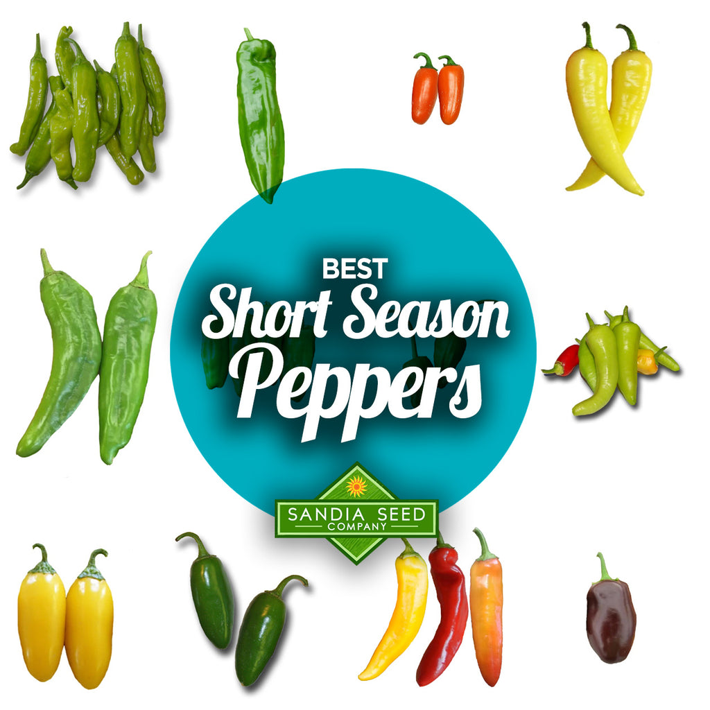 Fast Growing Vegetables - Short Season Peppers