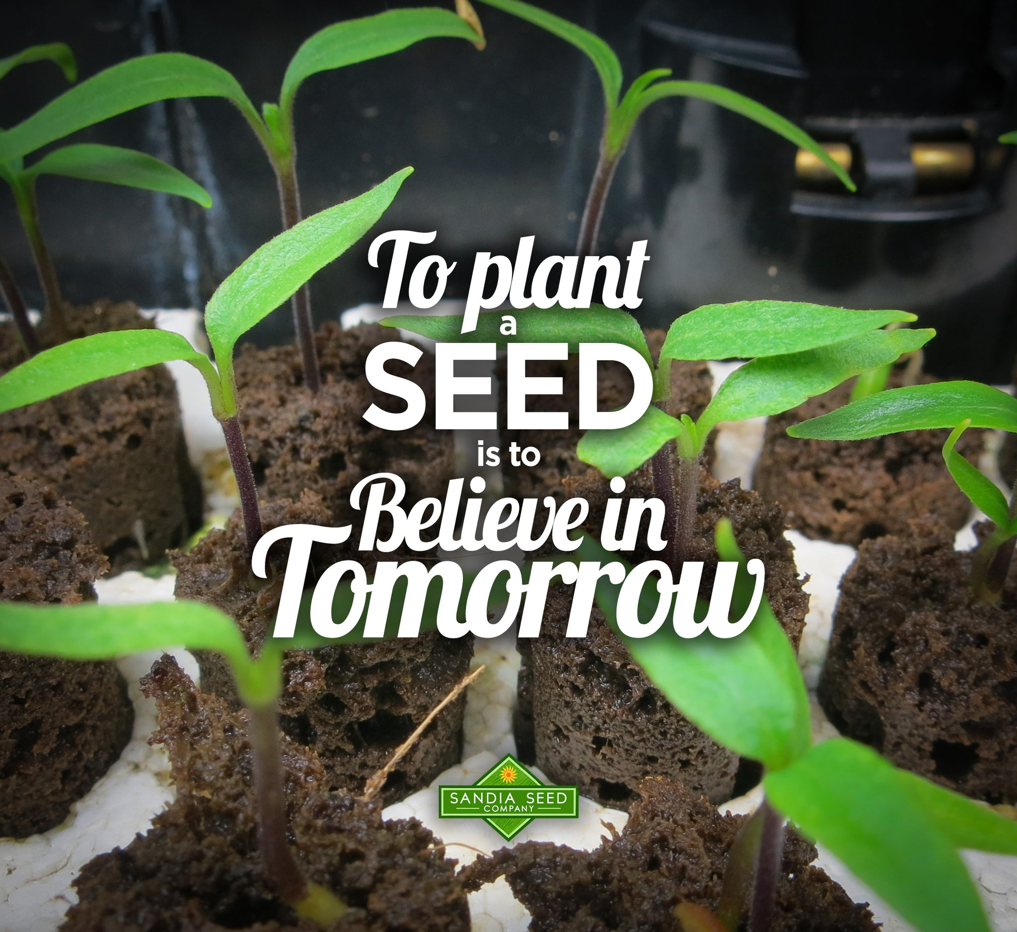 Garden Quotes: To plant a seed is to believe in tomorrow!