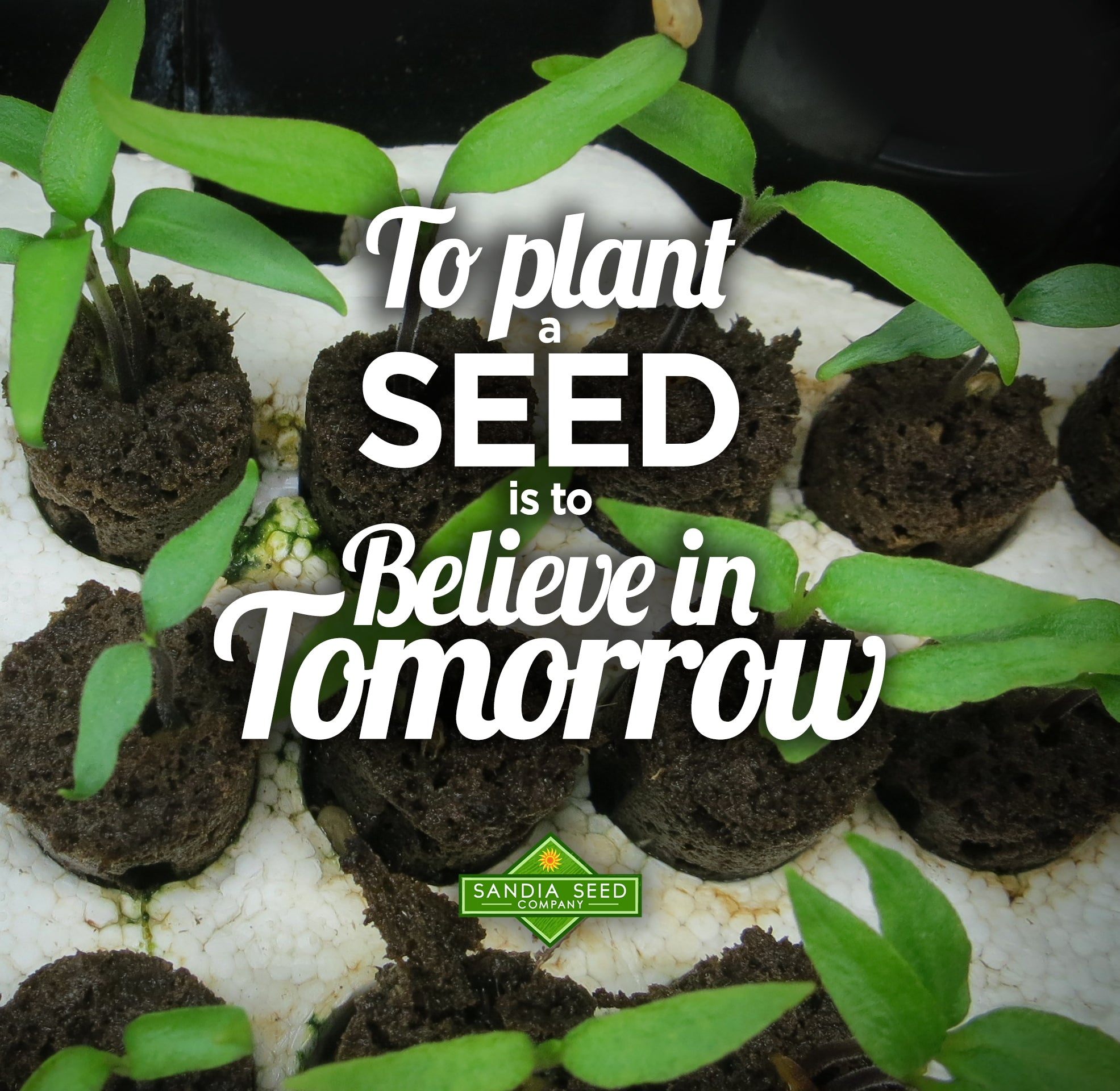 To Plant a Seed is to Believe in Tomorrow
