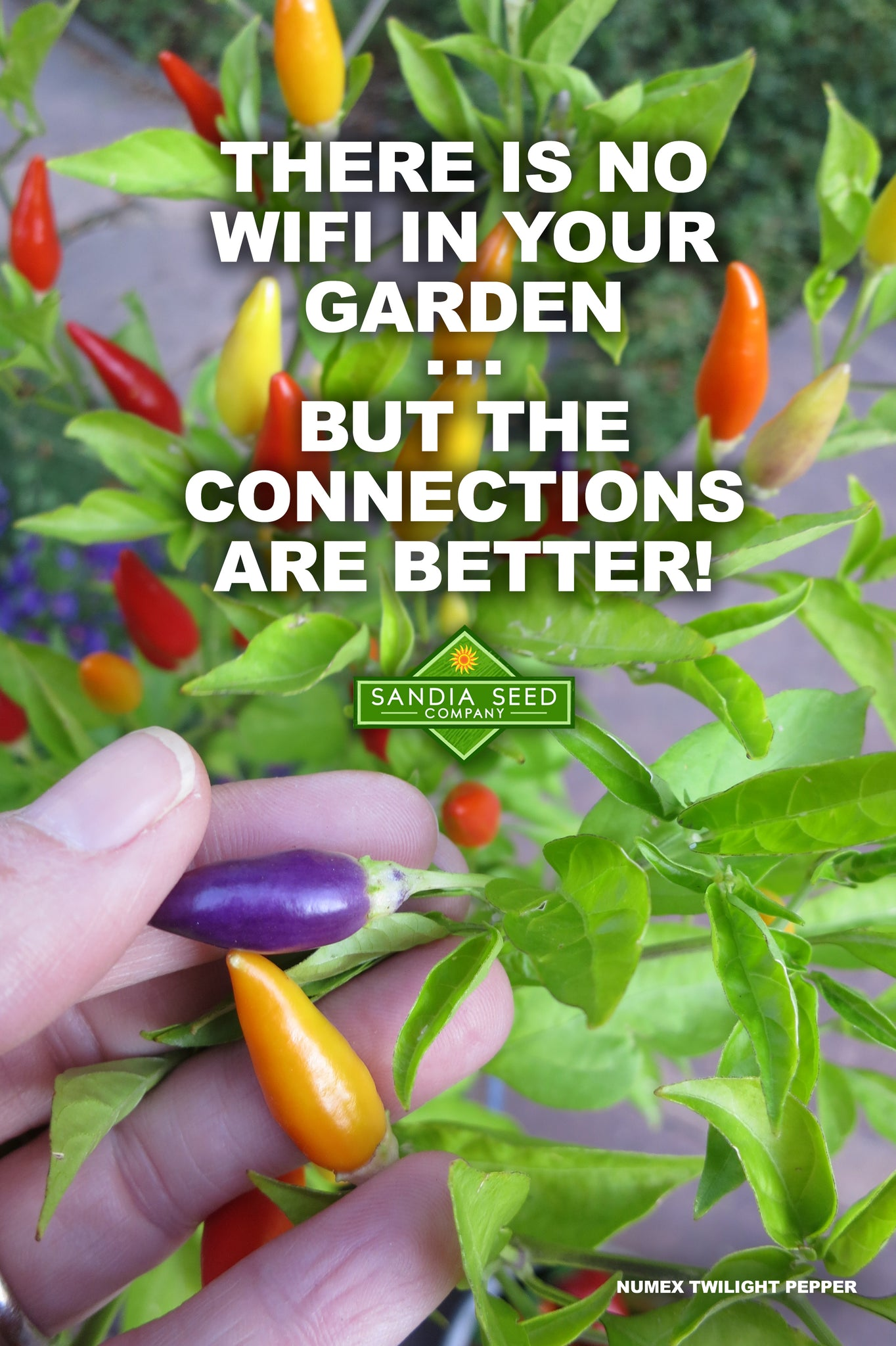 Garden Meme: There is no WiFi in your GARDEN ... but the connections are better!