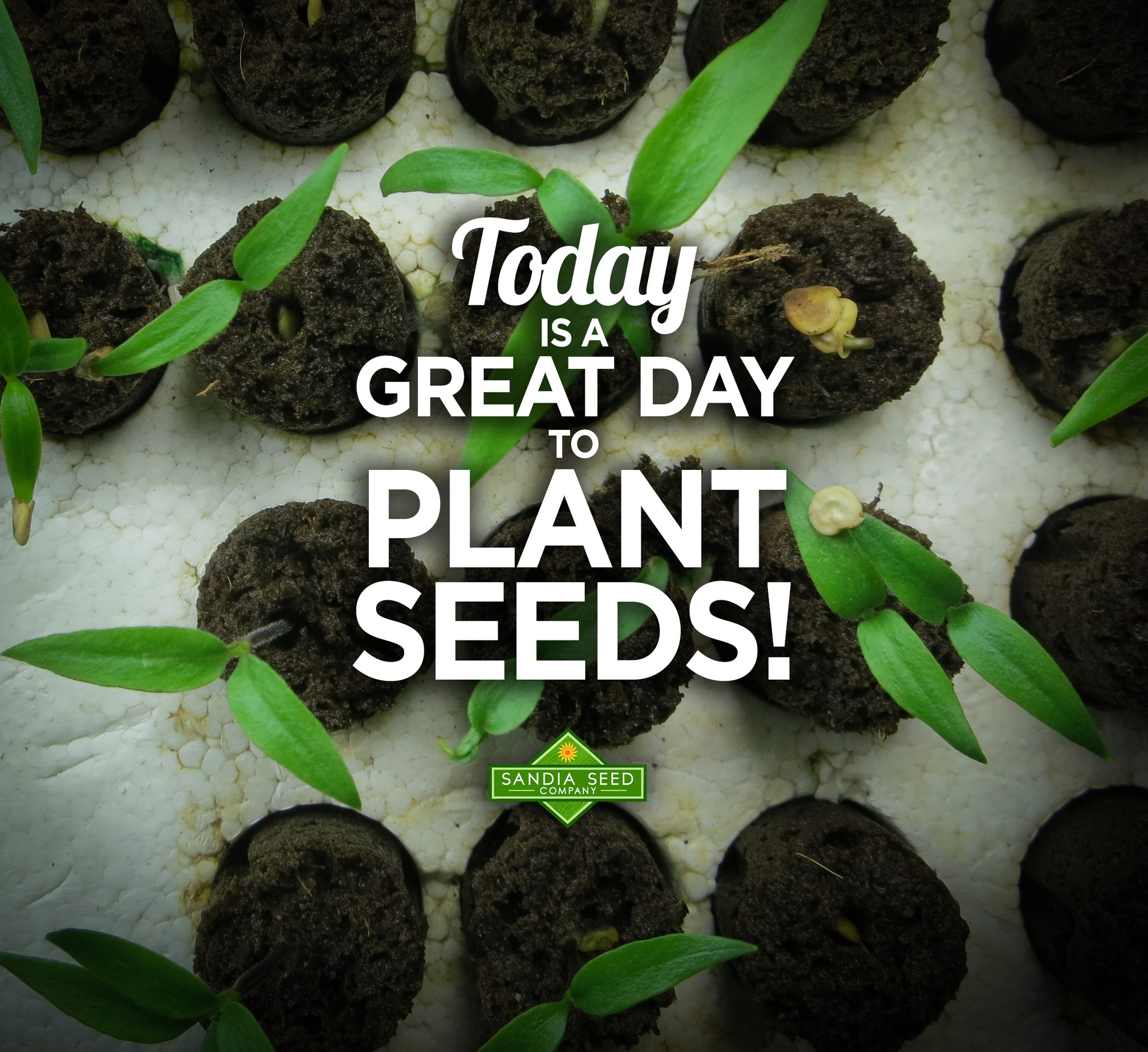 Today is a great day to plant seeds!