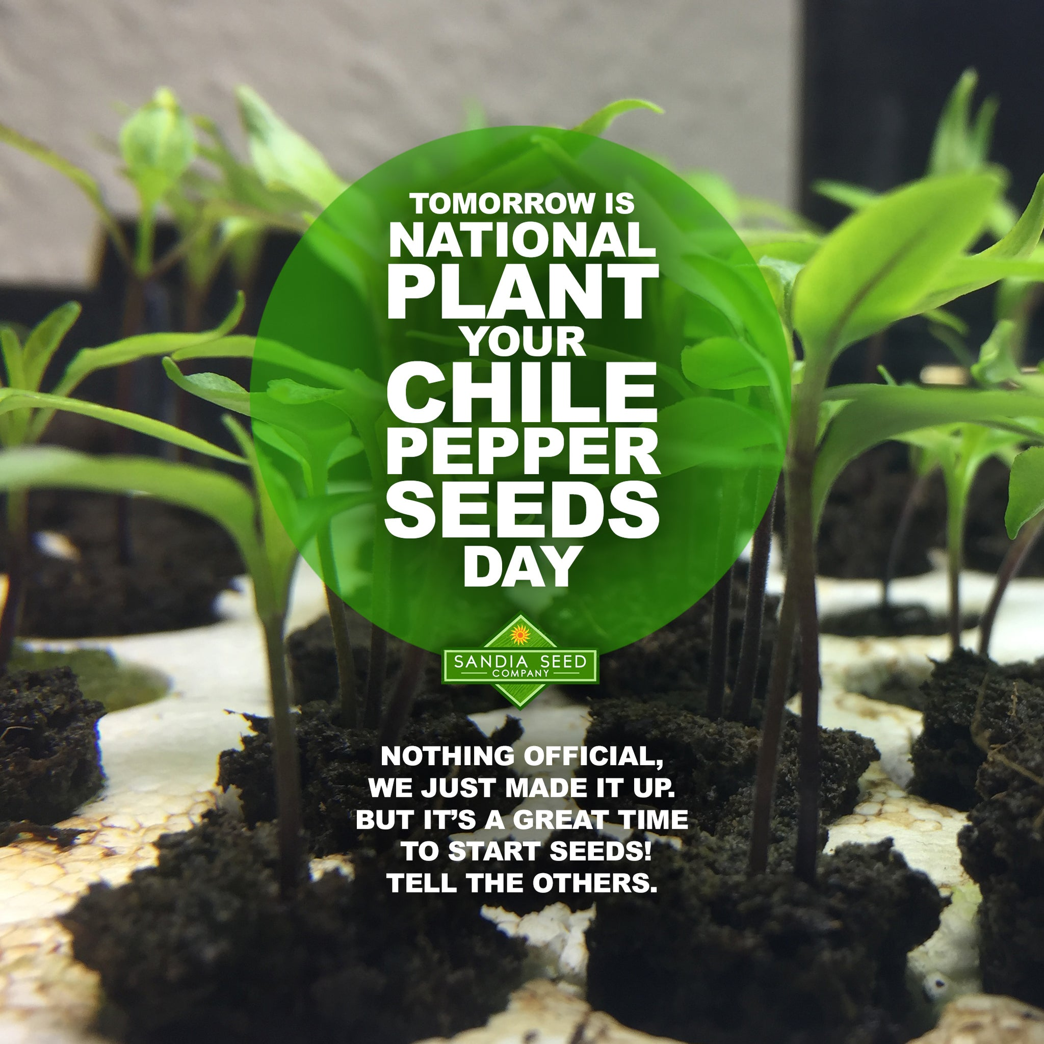 National Plant Your Chile Pepper Seeds Day