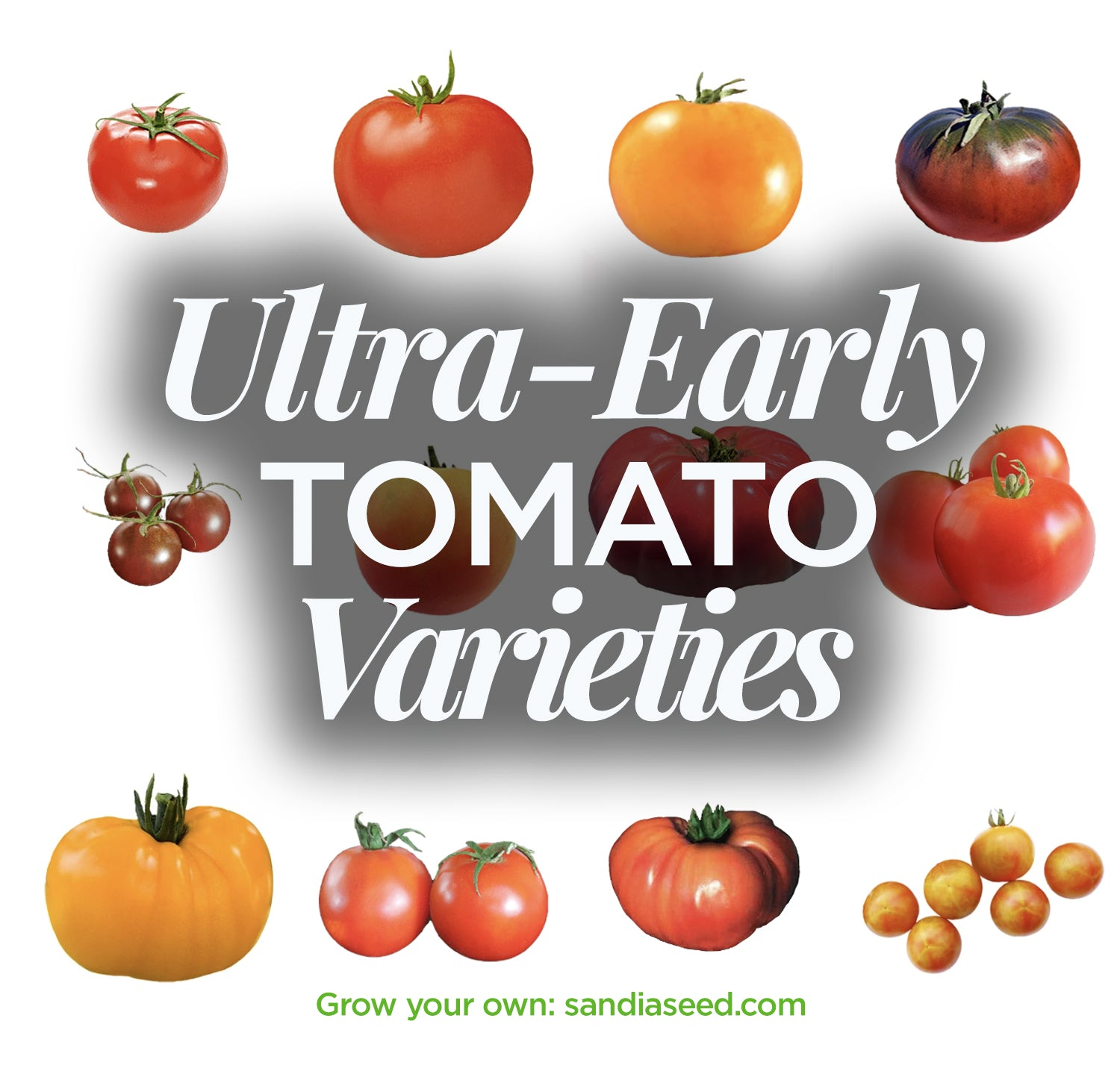 Ultra-early Tomato Varieties