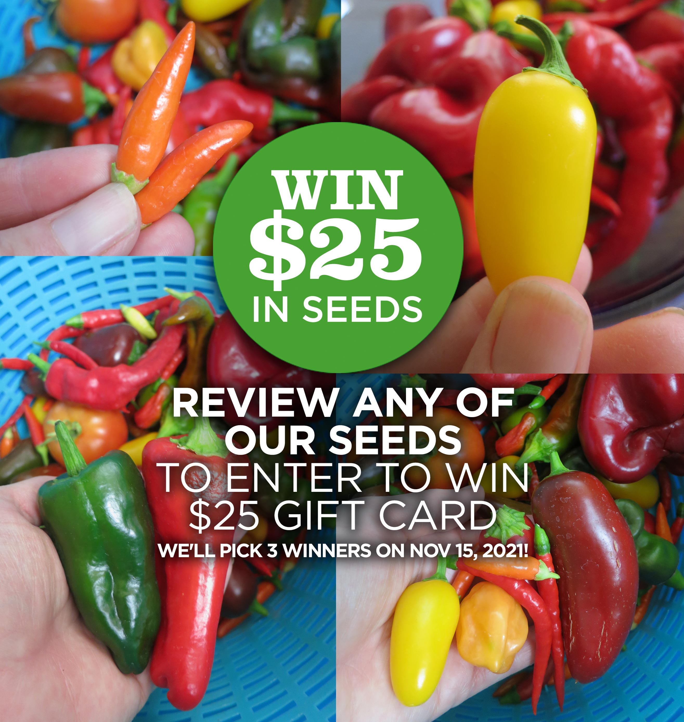 Win $25 in Free Seeds - Review any of our seeds to enter to win a $25 gift card - we'll pick 3 lucky winners on Nov 15, 2021