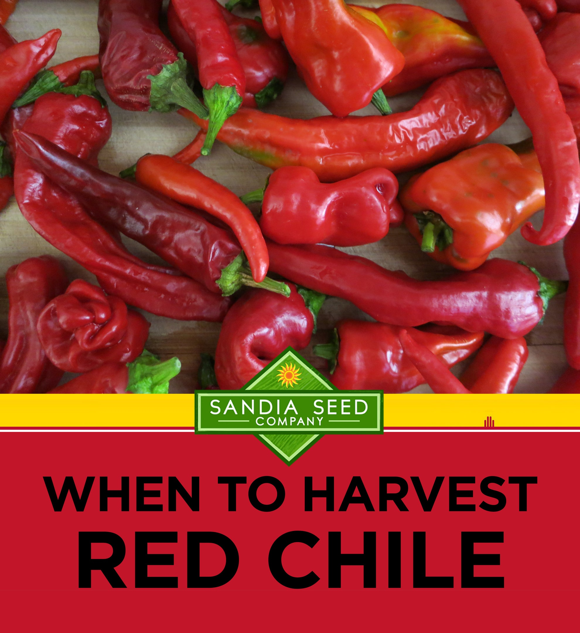 When to Harvest Red Chile