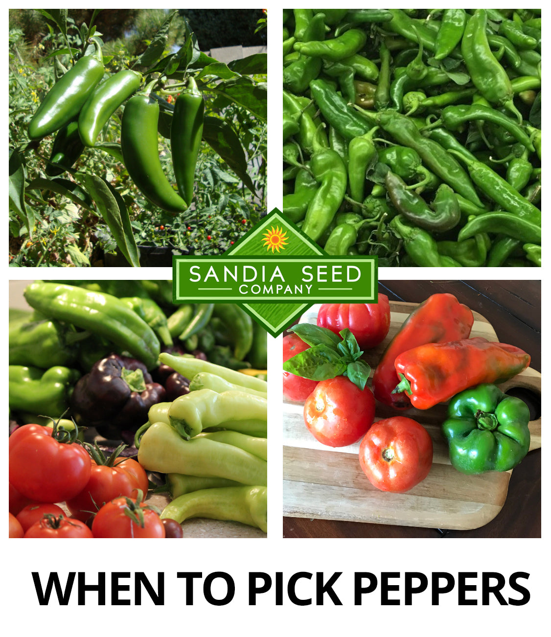 When to Pick Peppers