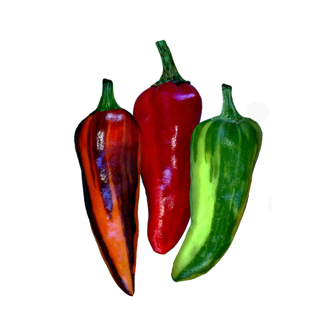 Rainbow Peppers - Fish Pepper Seeds