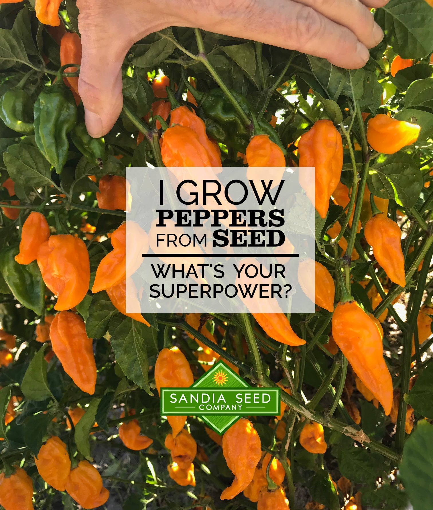 Gardening Quote: I Grow Peppers from Seed. What's your Superpower?