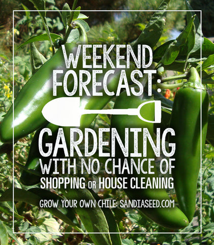 WEEKEND FORECAST:  GARDENING WITH NO CHANCE OF SHOPPING OR HOUSE CLEANING GROW YOUR OWN CHILE: sandiaseed.com