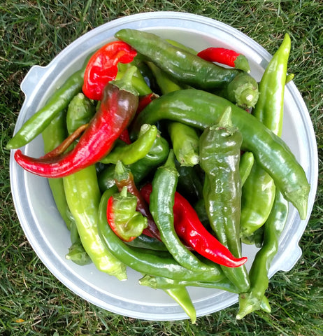 Companion Plants for Chile Peppers ensure a great harvest!