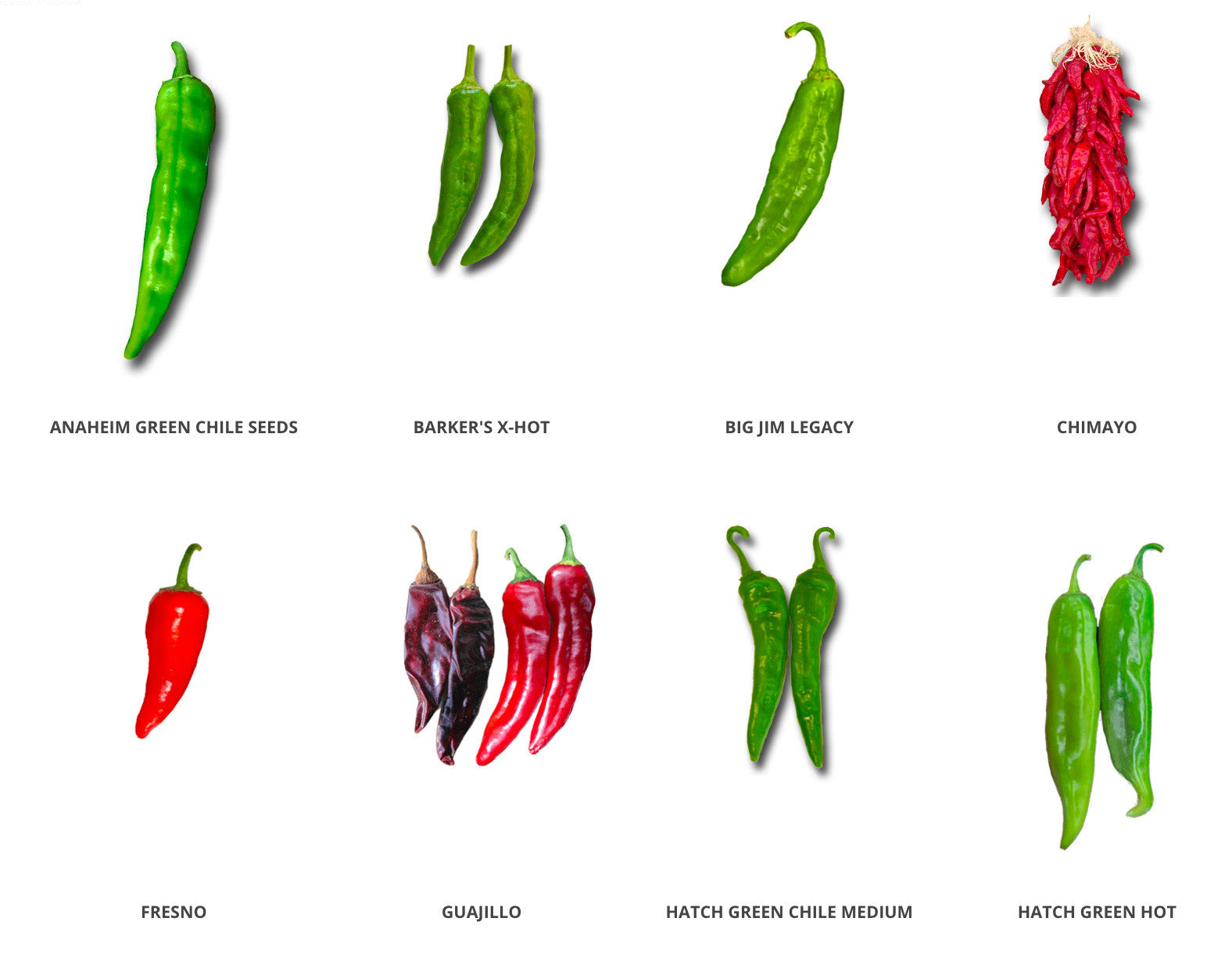 Tips to grow peppers from seed