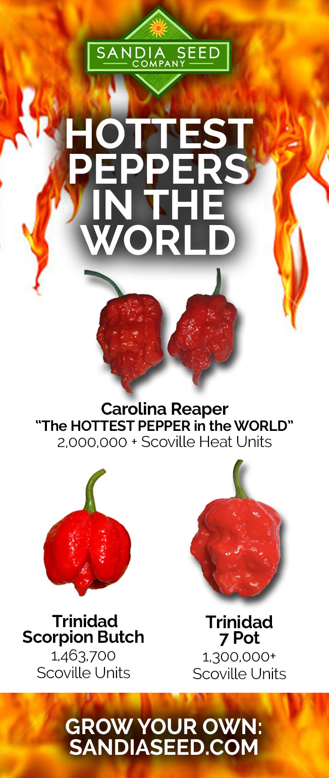 Hottest Pepper Seeds in the World including Carolina Reaper Seeds