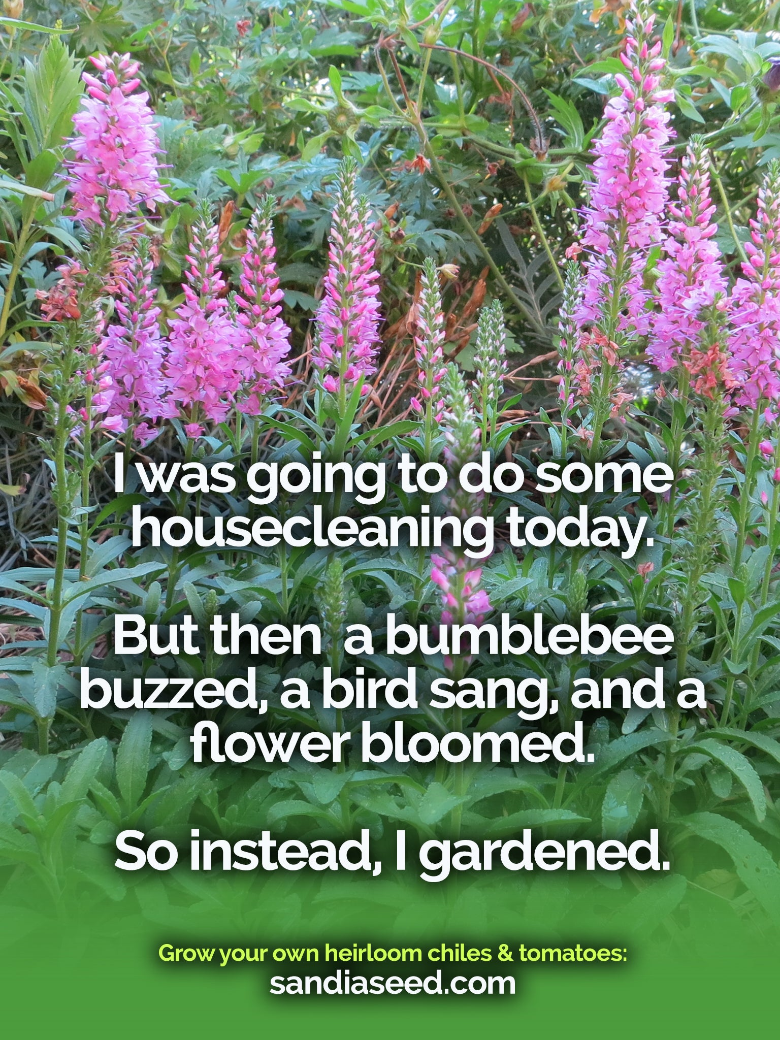 I was going to do some housecleaning today, but then a bumblebee buzzed, a bird sang, and a flower bloomed. So instead, I gardened. - Garden Meme