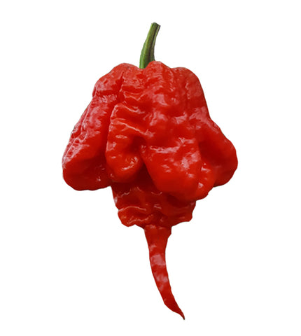 Bhut Jolokia Red Ghost Pepper Seeds