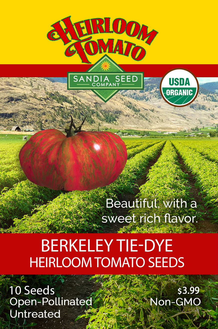 Large Short Season Tomato: Berkeley Tie-Dye Tomato Seeds