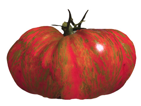 Tomato - Super Fantastic Hybrid Seeds