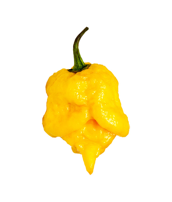 Sandia Seed Company - Carolina Reaper Yellow 100 Seeds - Bulk