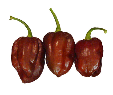 Trinidad 7 Pot Douglah x Moruga Chocolate 100 Seeds - Bulk