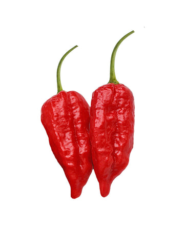 Bhut Jolokia Red Ghost Pepper - 100 Seeds BULK