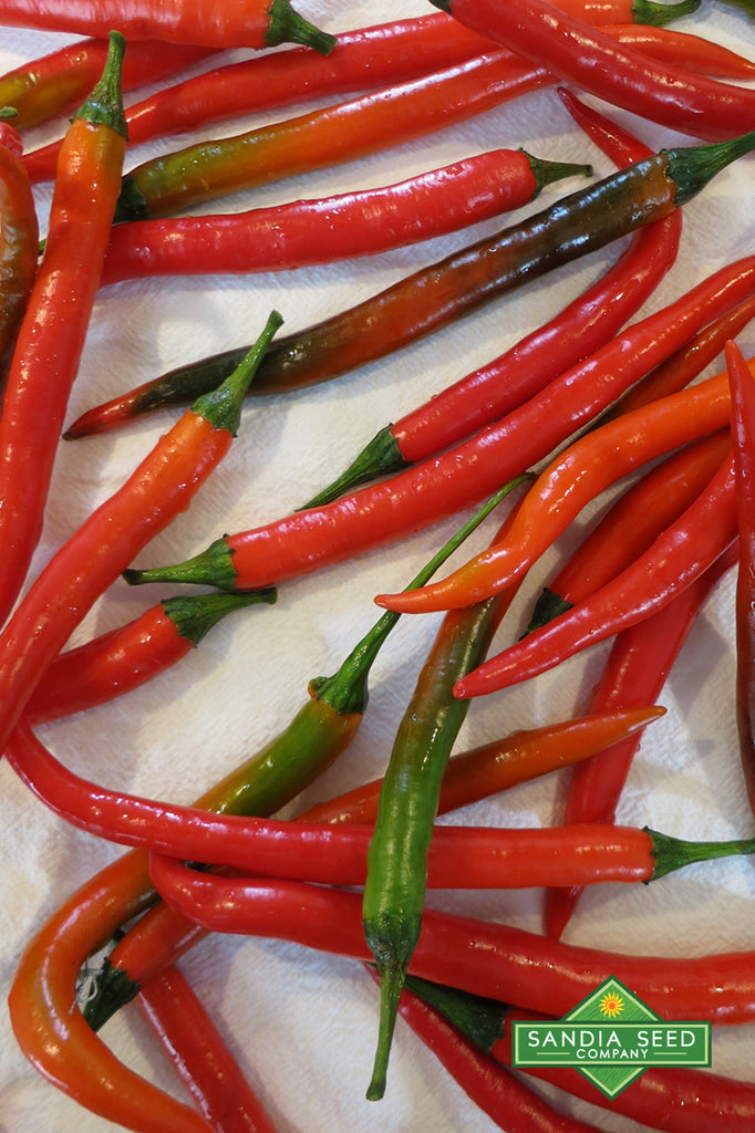 Goat Horn Pepper Seeds - Sandia Seed Company