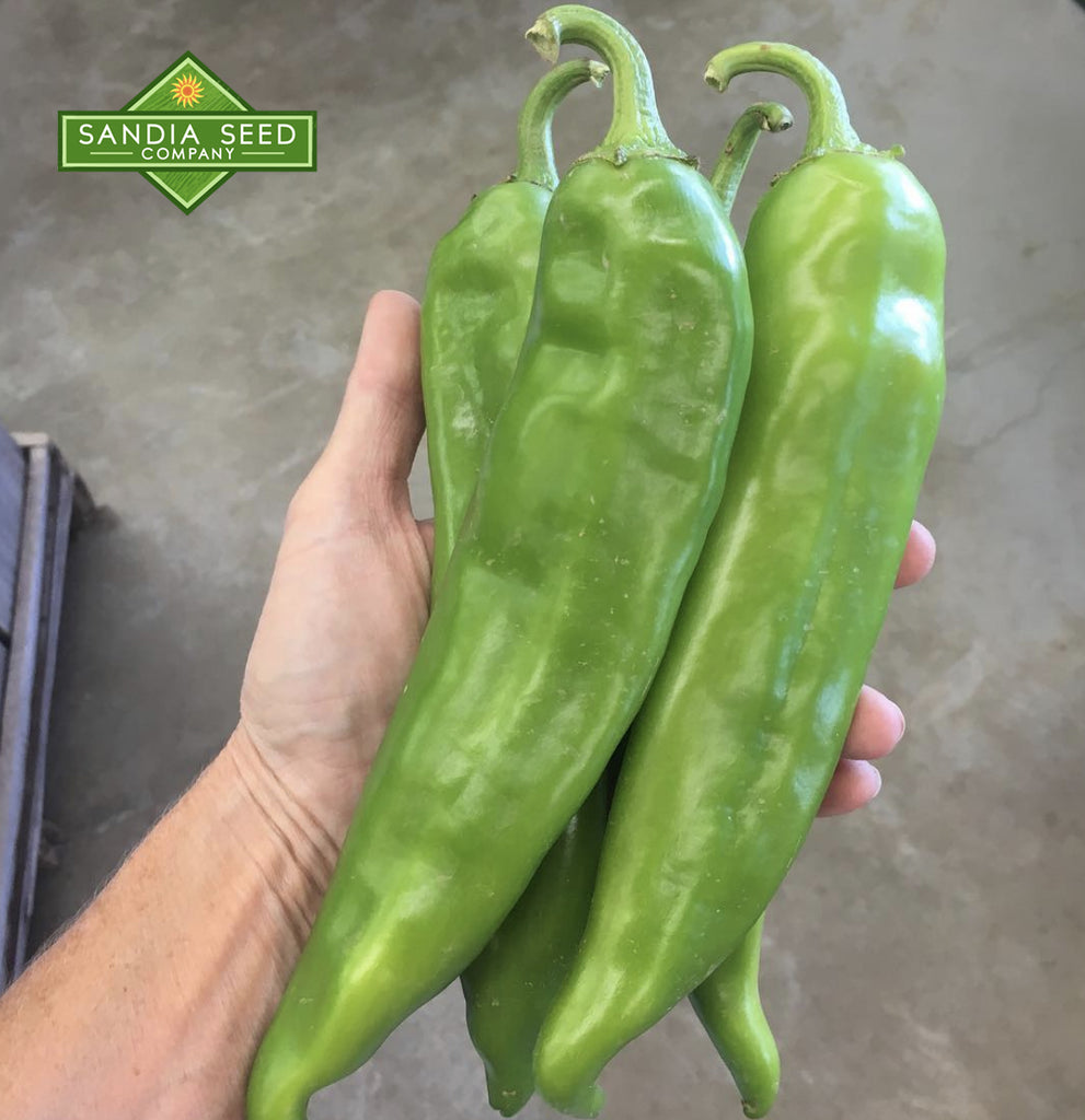 Hatch Green Hot - Doublecross Chile Seeds - Sandia Seed Company