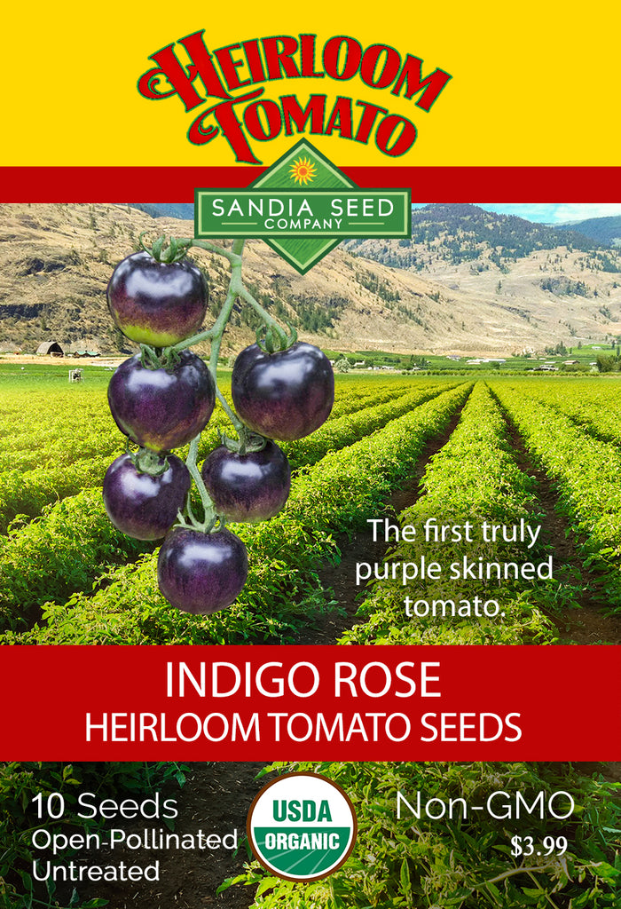 Tomato - Indigo Rose Heirloom Seeds ORG - Sandia Seed Company