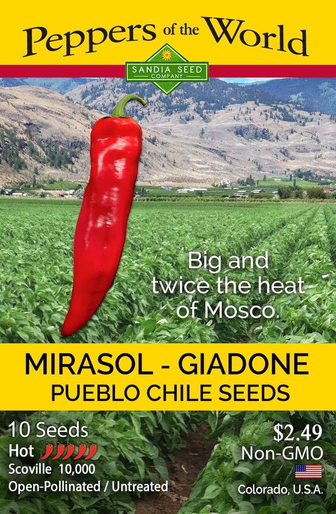 Mirasol Giadone Pueblo Hot Chile Seeds - Authentic from Colorado