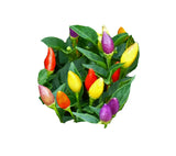 NuMex Twilight Ornamental Pepper - 100 Seeds BULK - Sandia Seed Company
