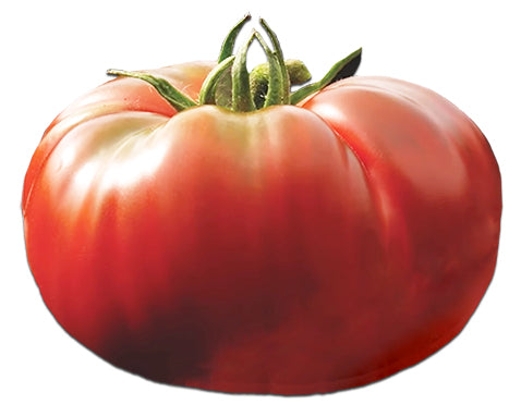 Tomato - Zapotec Pleated Heirloom Seeds