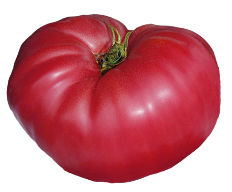 Tomato - New Yorker Heirloom Seeds