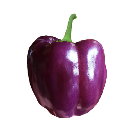 Bell Golden Cal Wonder Sweet Pepper Seeds ORG