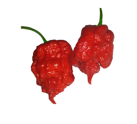 Trinidad Scorpion Yellow (CARDI) 100 Seeds - Bulk