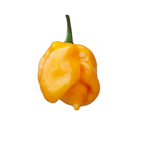 Trinidad Scorpion Pepper 100 Seeds - Bulk
