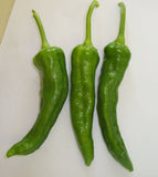 Hatch Green Chile X Hot - Barker's Hot - 1/2 oz. Seeds - BULK - Sandia Seed Company