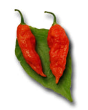 Bhut Jolokia Red Ghost Pepper Seeds - Sandia Seed Company