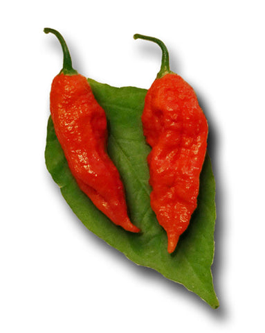 Trinidad Douglah / Chocolate 7 Pot Pepper Seeds