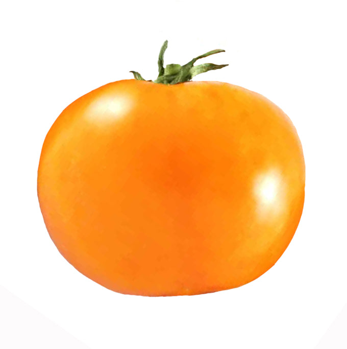 Tomato - Chef's Choice Orange F1 Seeds - Sandia Seed Company