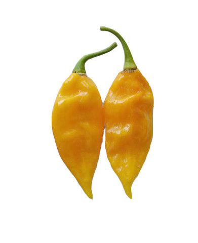 Bell Mini Orange Snack Pepper 100 Seeds - BULK