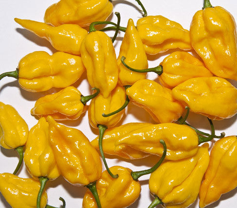Fatalii Seeds – Heirloom - Sandia Seed Company
