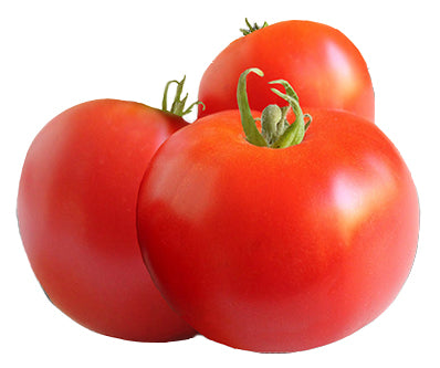 Tomato - Abe Lincoln Heirloom Seeds