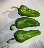 Padron - Sweet Spanish Heirloom Pepper Seeds - Sandia Seed Company