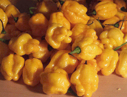 Scotch Bonnet Yellow - Sandia Seed Company