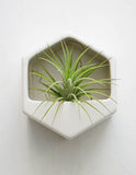 Geo Hanging Ceramic Planter