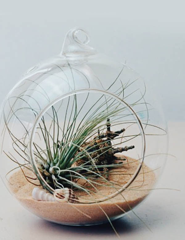 Glass Bubble Terrarium