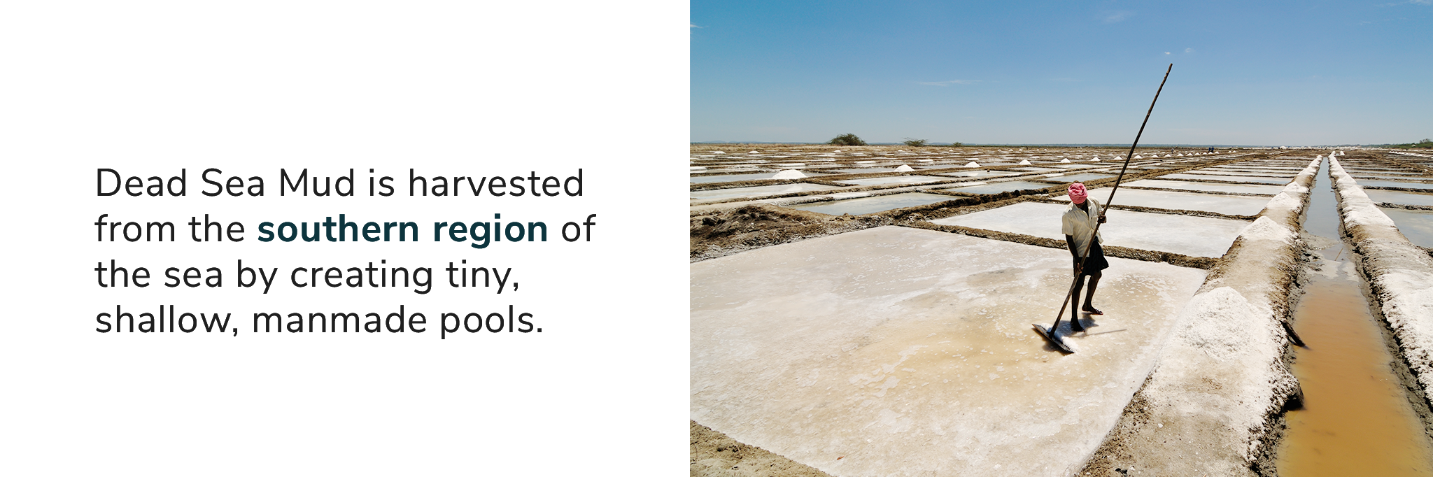 Dead Sea Mud is harvested from the southern region of the sea by creating tiny, shallow, man-made pools.