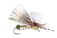 Stoneflies: Gould's Half Down Golden Stone