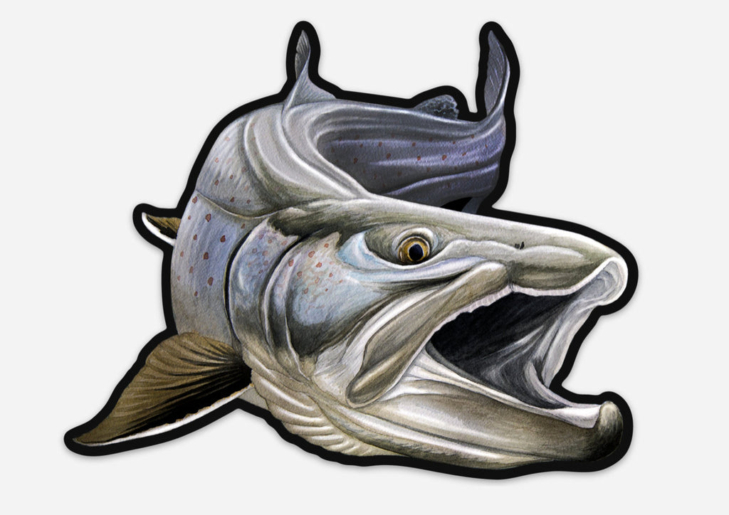 Nick Laferriere Bull Trout Decals