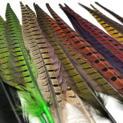 Wapsi Dyed Ringneck Tail Feathers - Pair