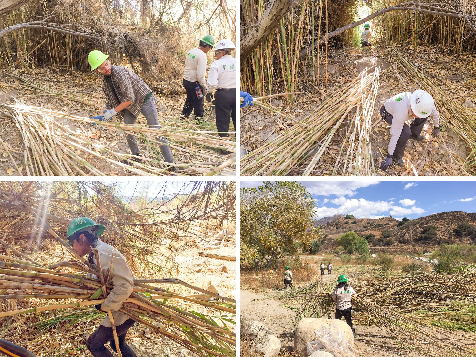 Removing Invasive Arundo Species with the LA Conservation Corps